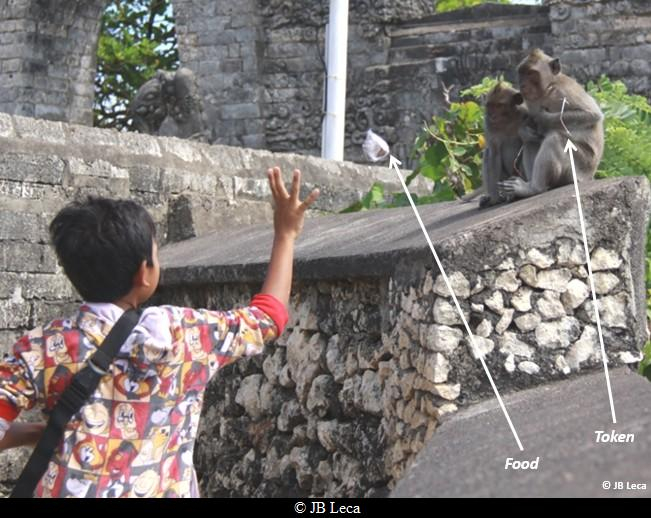 Local kid offering a fruit bag to a young macaque holding the eyeglasses he just stole from a temple visitor (Uluwatu)