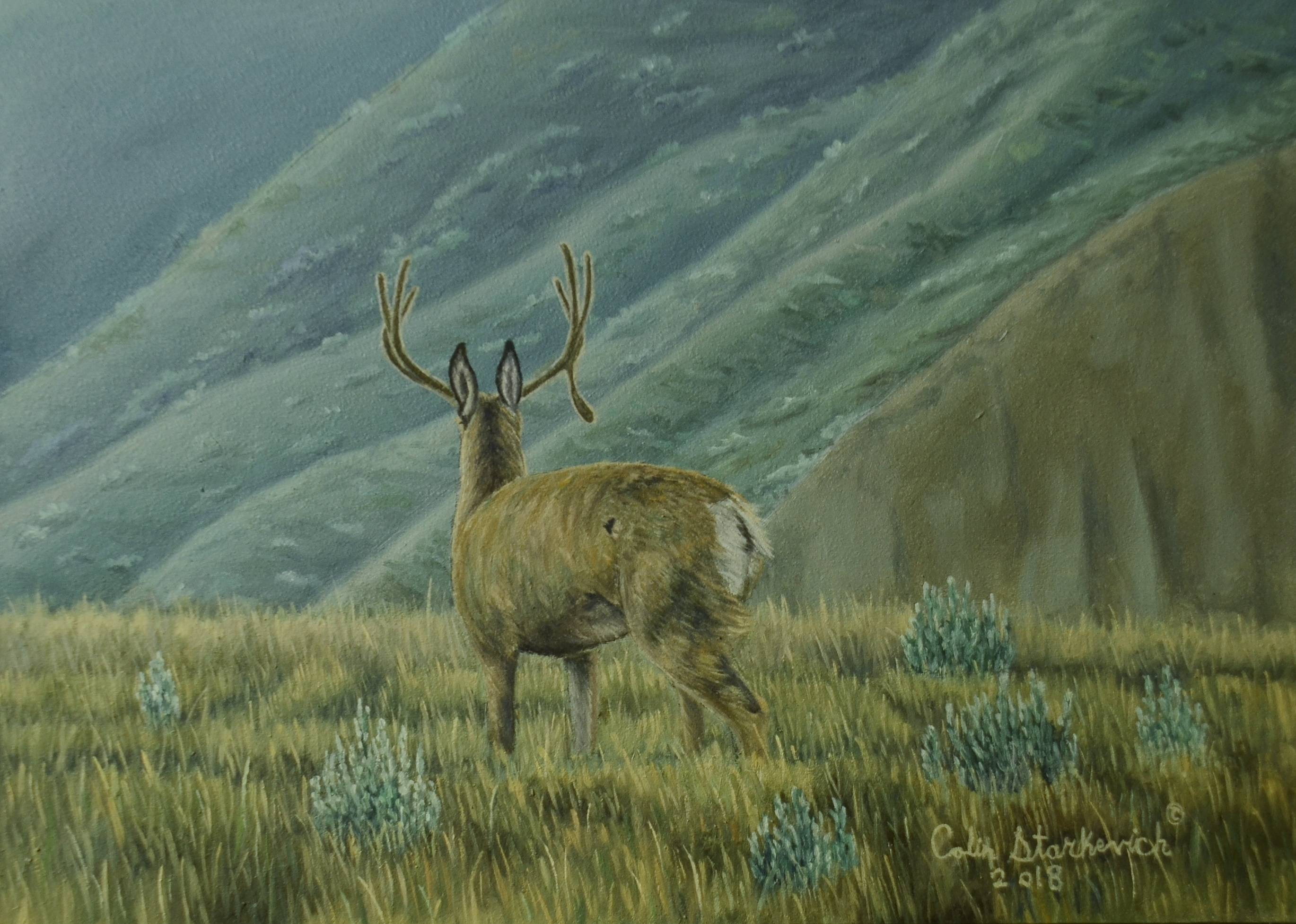 """Among The Shadows - Mule Deer (5 by 7"""" oil on panel) In Private Collection"""