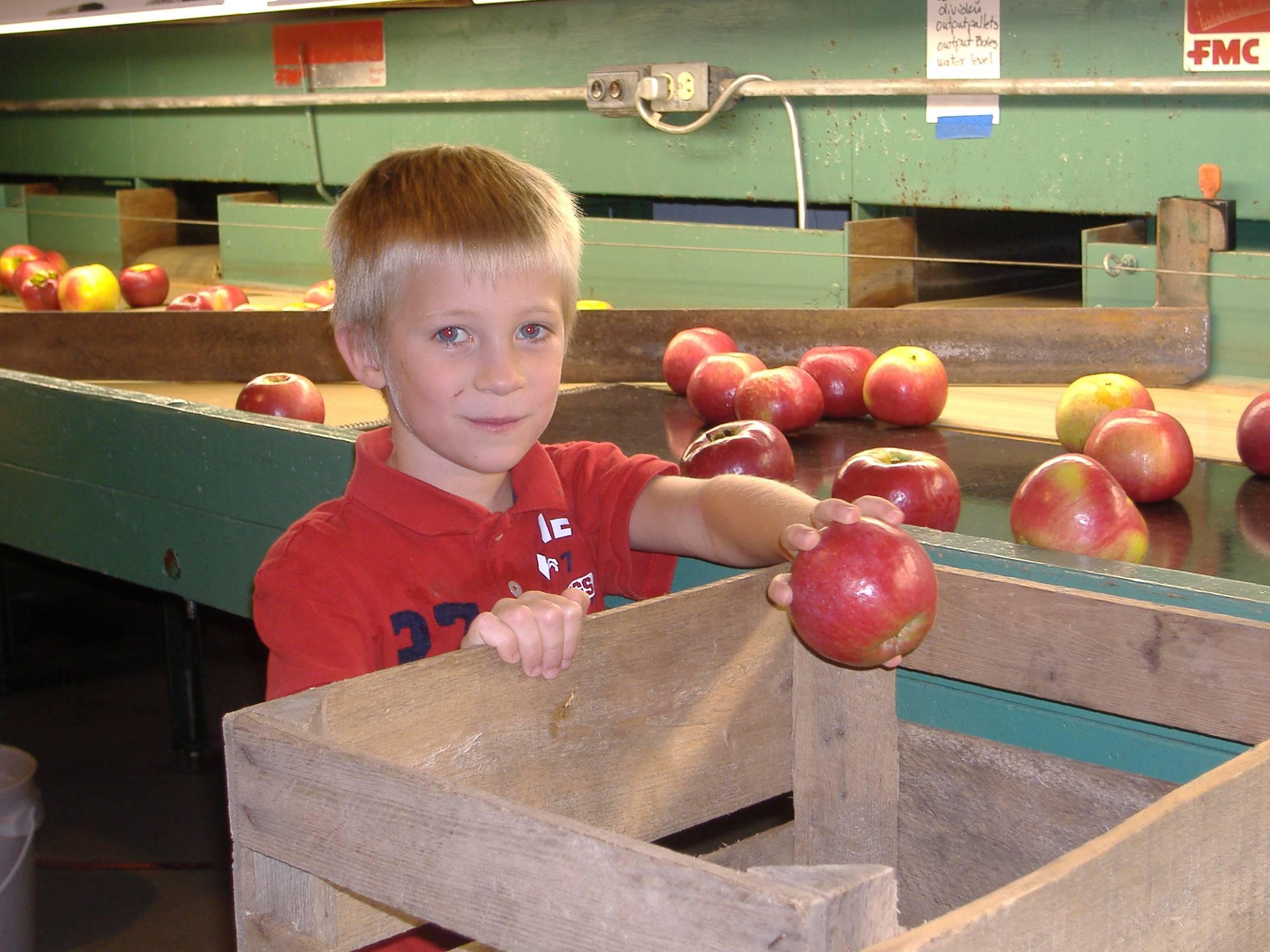Gunnar inspecting Cortland apples