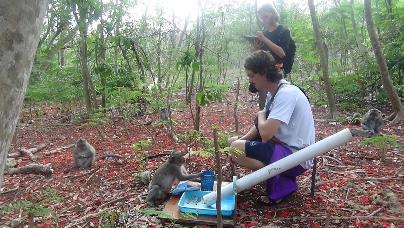 Christian Dunn and Caleb Bunselmeyer experimentally inducing bartering in a long-tailed macaque (Uluwatu, Bali, Nov. 2019)