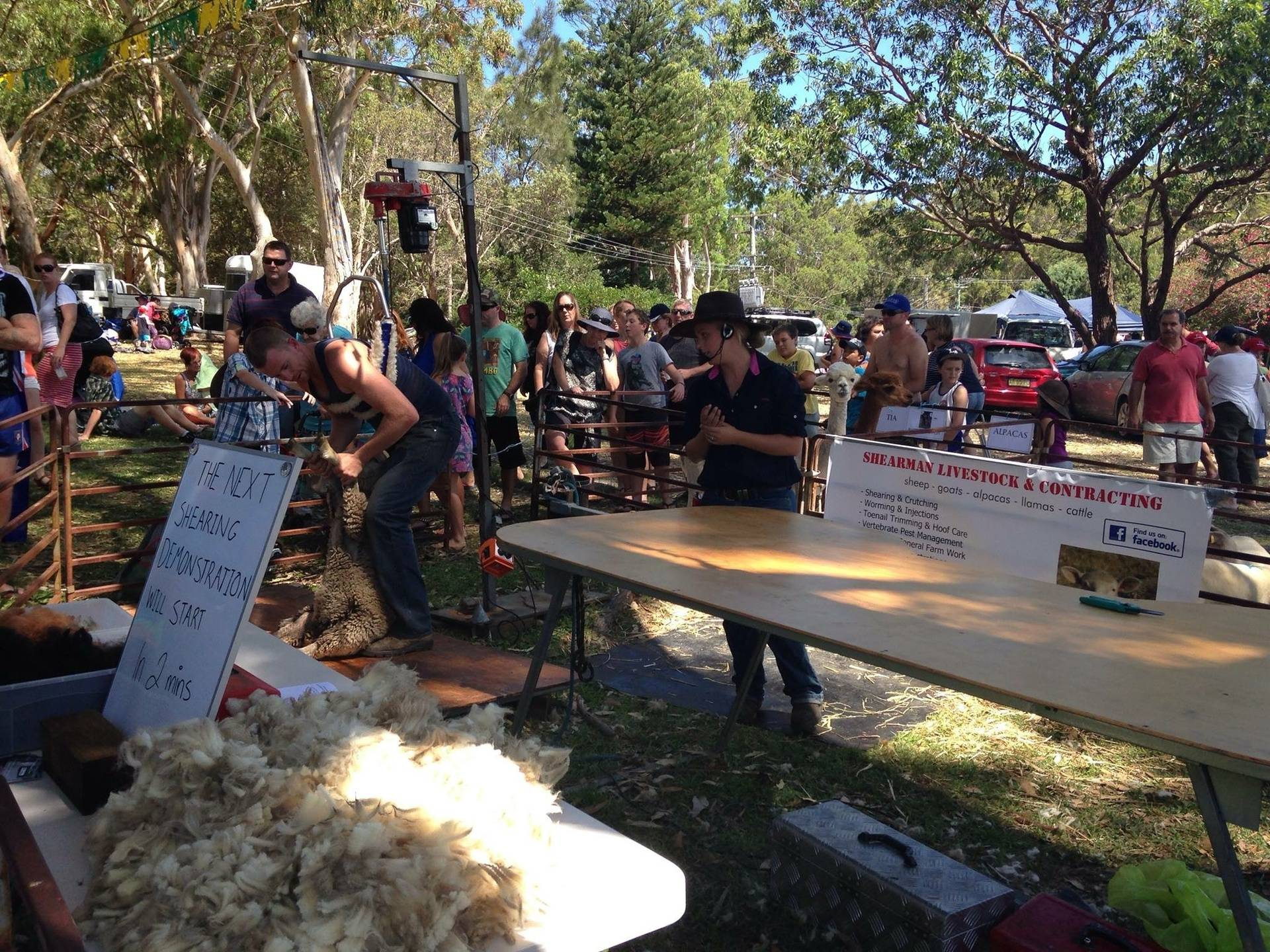 Australia Day Shearing Demo 2015