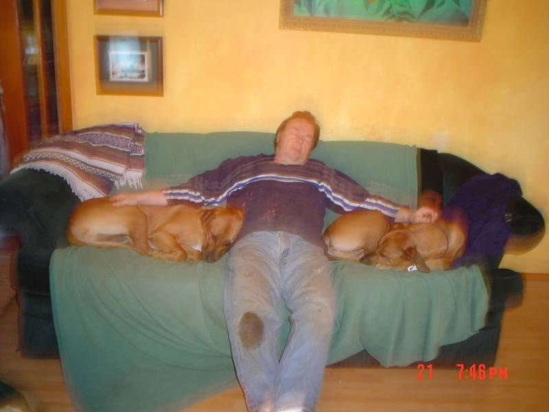Tired dad and pooped pups