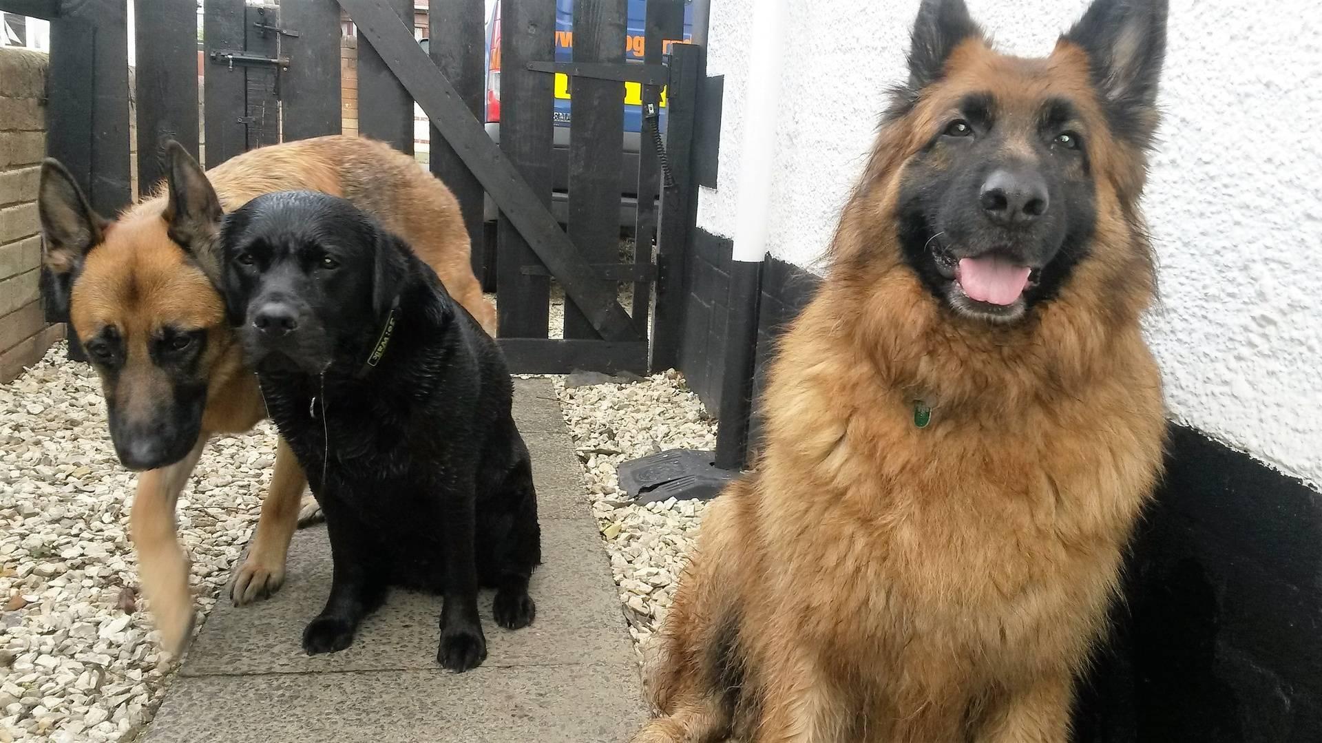 Tyson (front), Oscar & Reuben