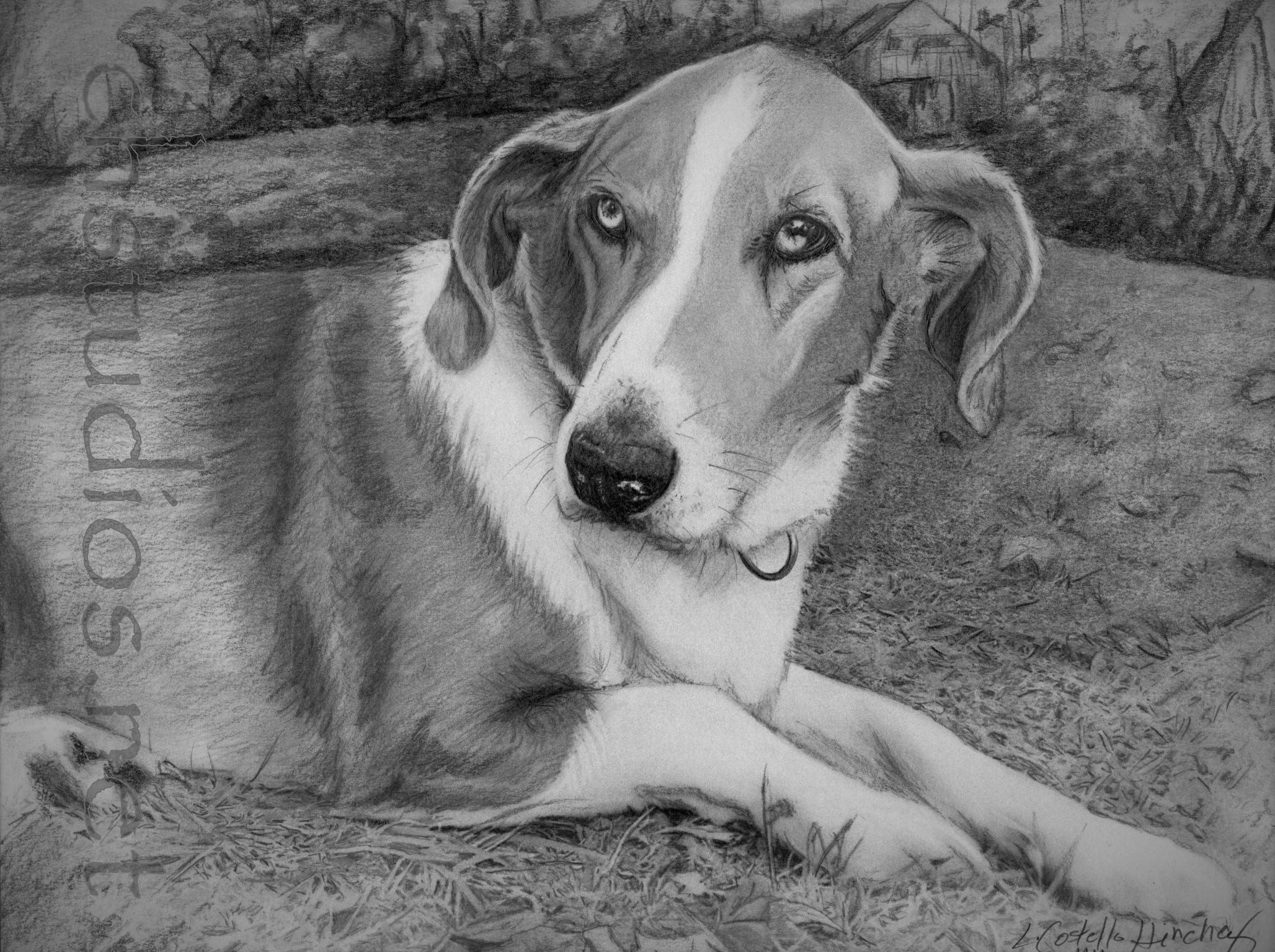 Buddy Pet Portrait Commission