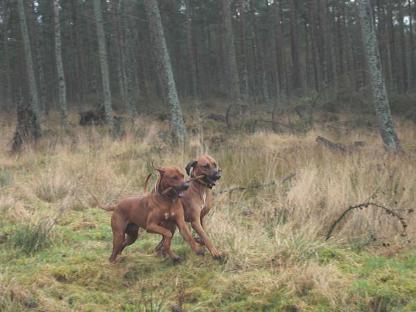 Elvis and Baako sharing a stick