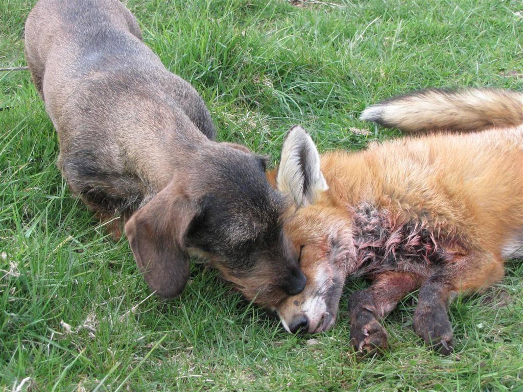 Aya and fox