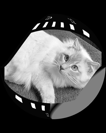 Toulouse the film star!