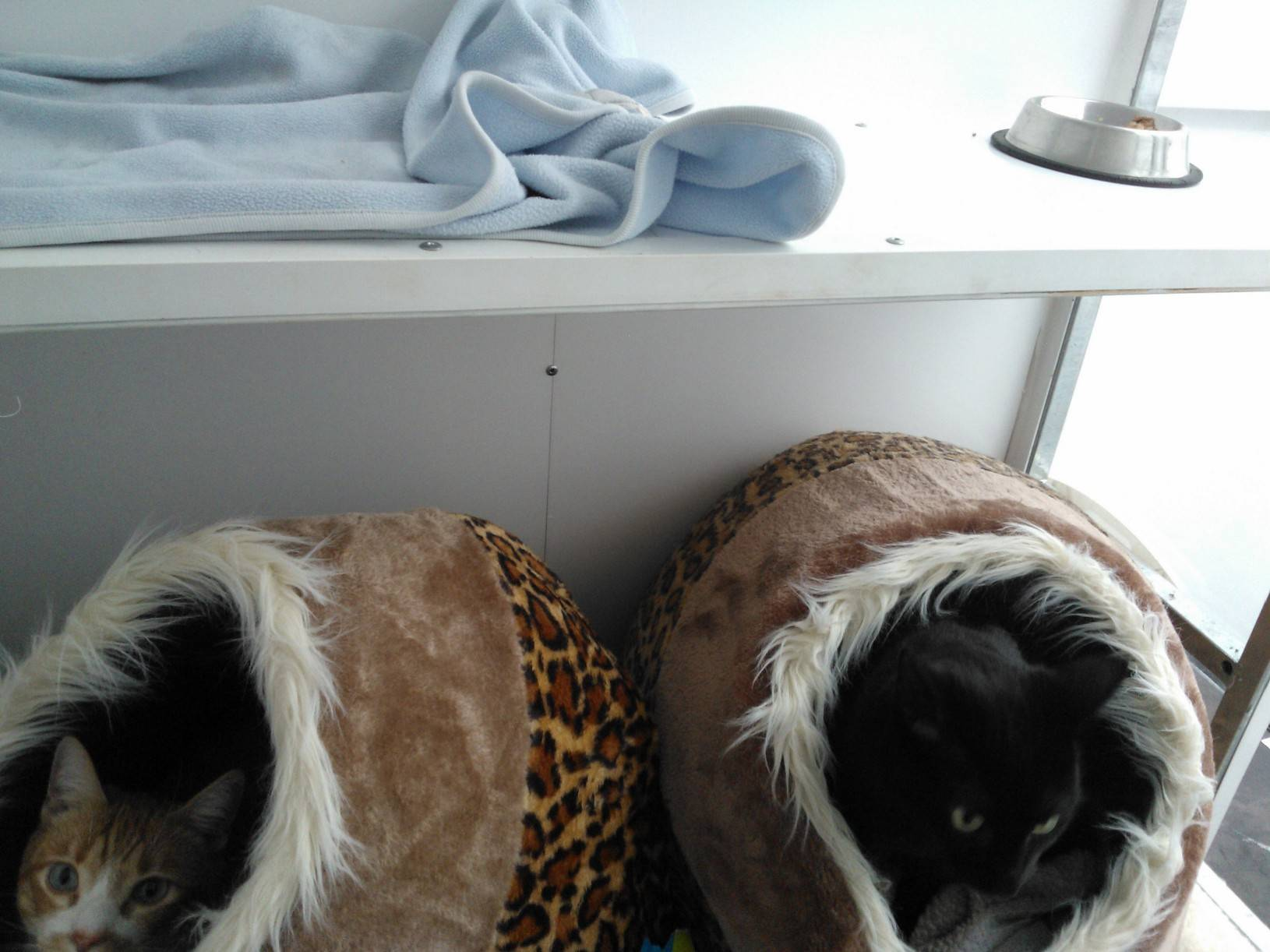 LUCKY AND MARLEY