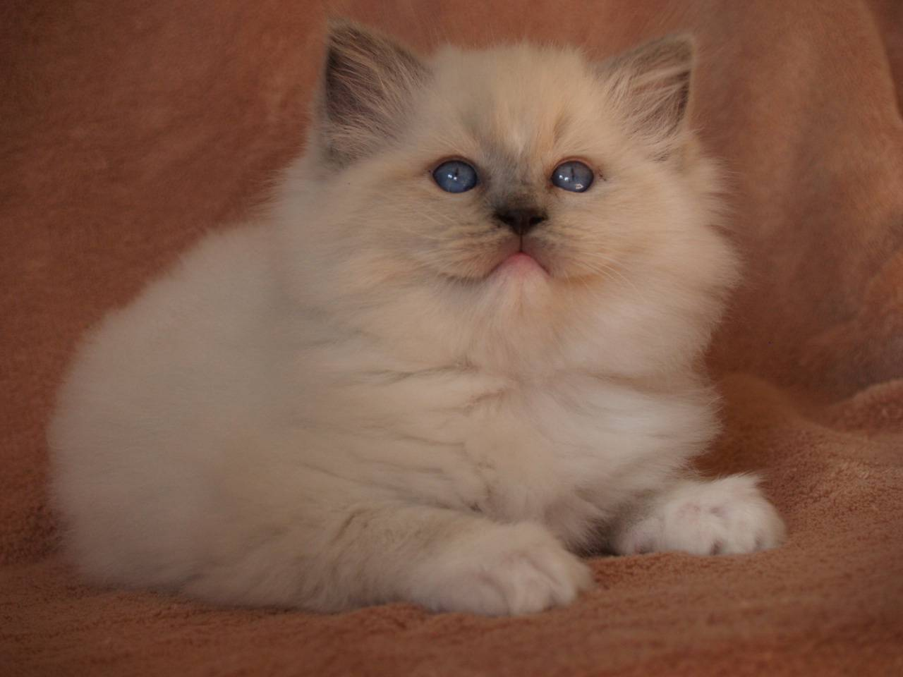 Blue Mitted Baby