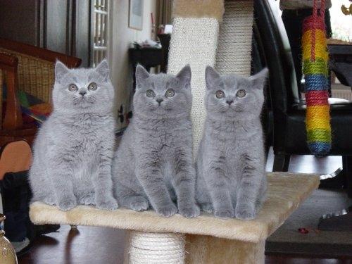 Ossepos-kittens