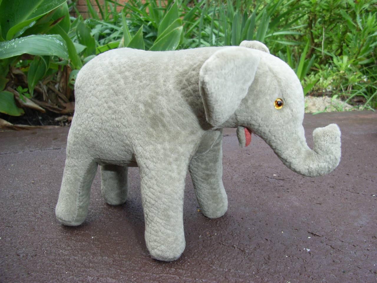 Ely a baby elephant