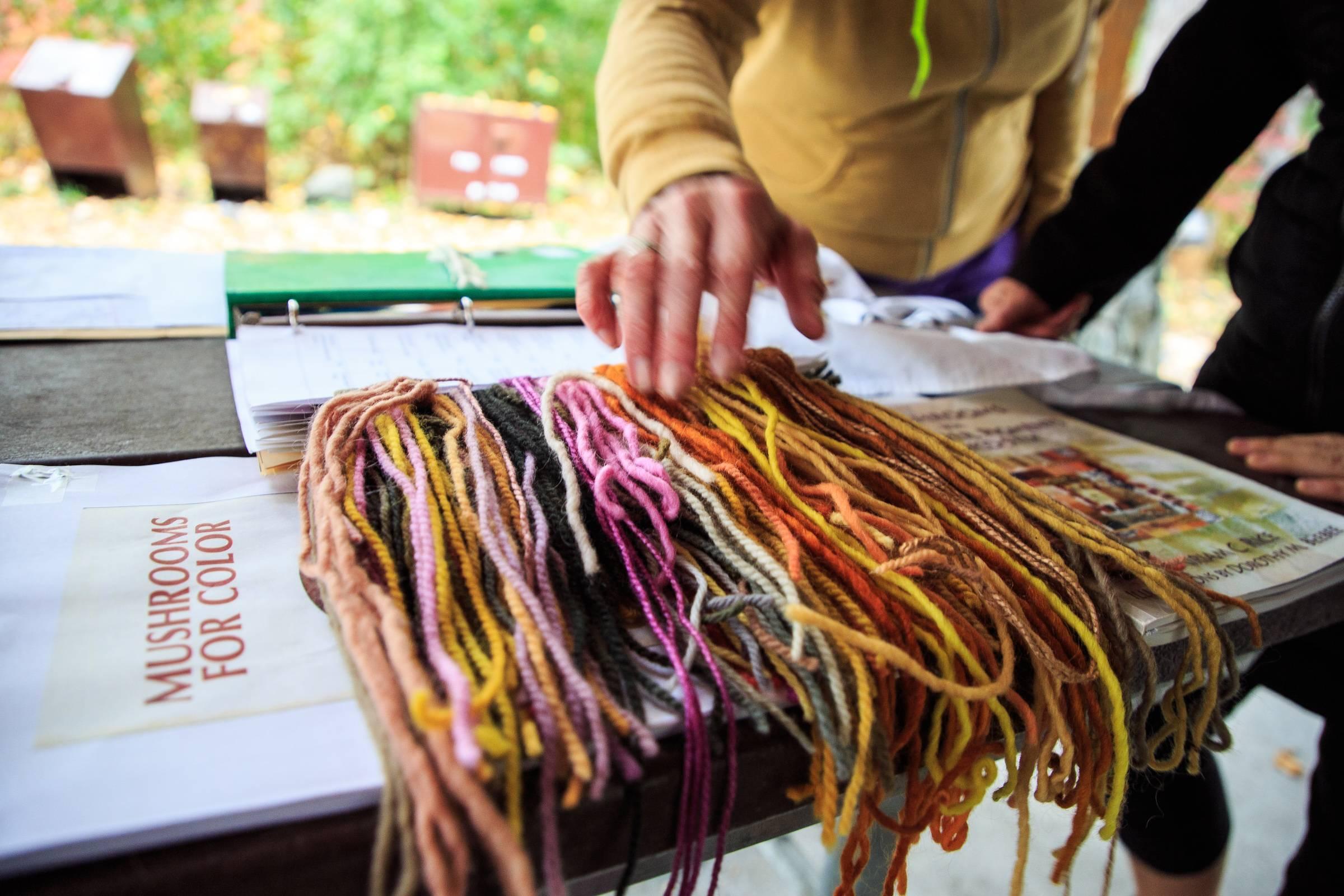 Mushroom Dye Workshop