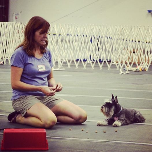 Sarah's obedience demonstration
