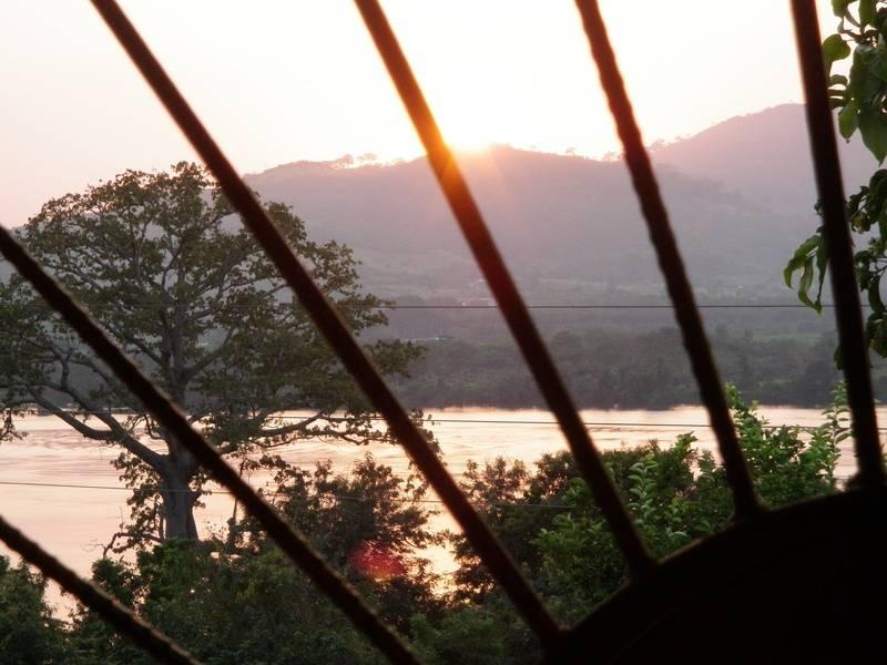 sunset beyond 'cotton' tree