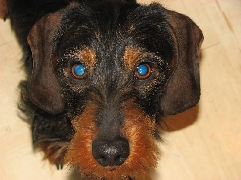 IB, old blue eyes.