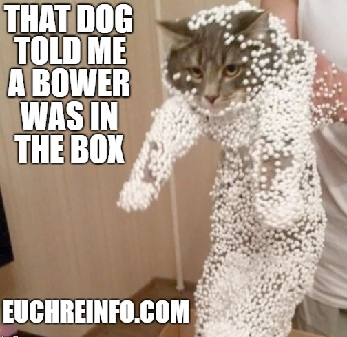 That dog told me a bower was in the box.