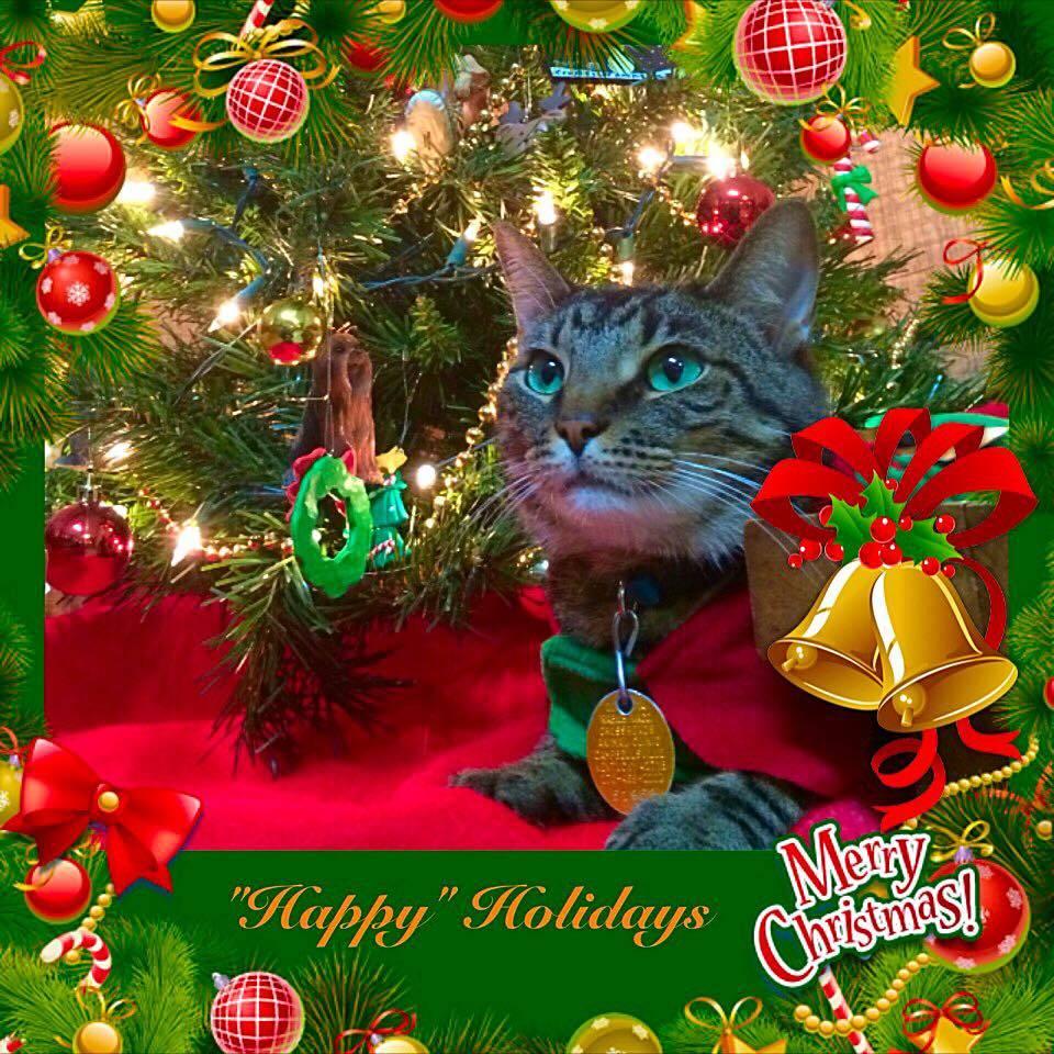 Christmas Card Posing 2014