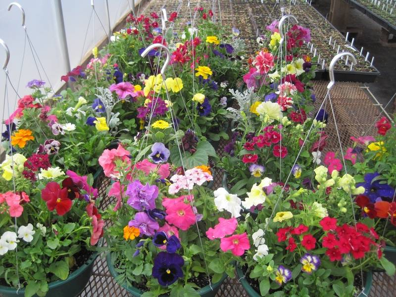 Multiple Garden Baskets