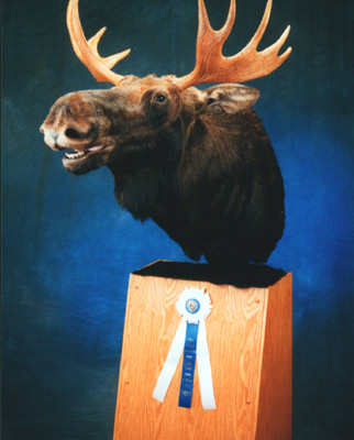 1st. Place World Taxidermy Competition