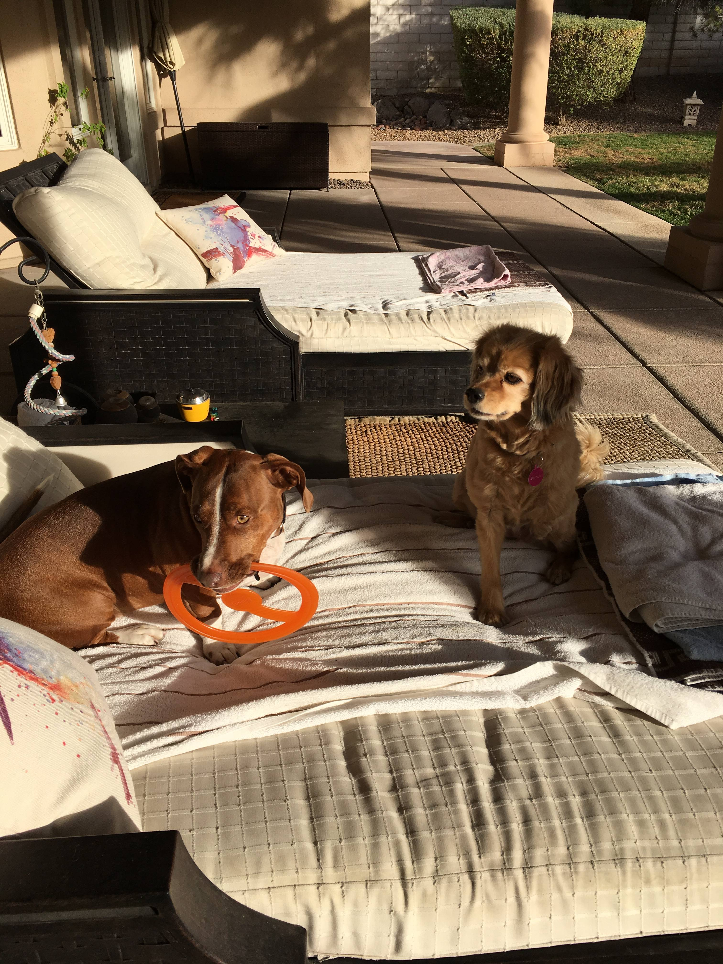 Broc and Brittany loves to hang out on patio.