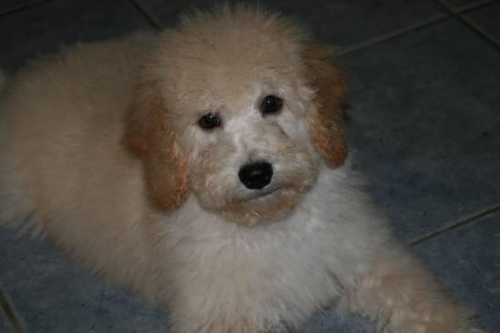 Riley 14 weeks