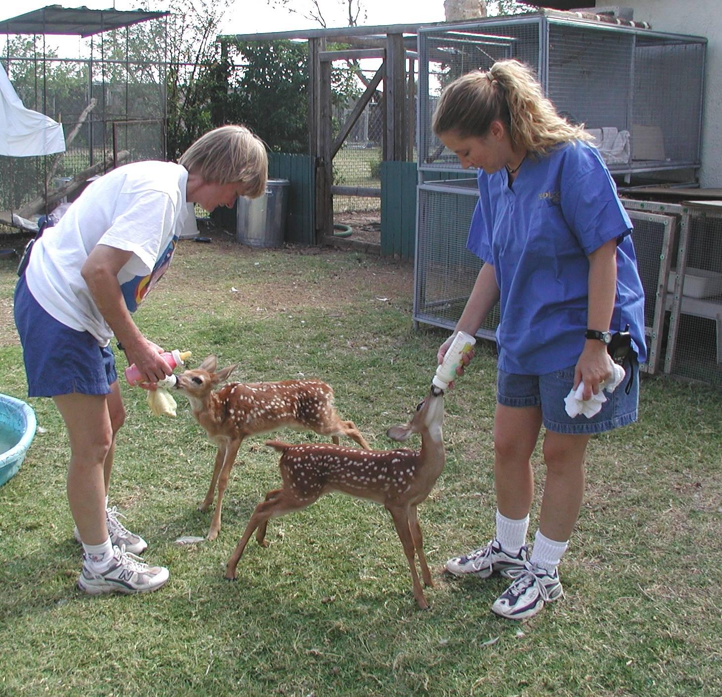 Volunteers feeding our deer fawns