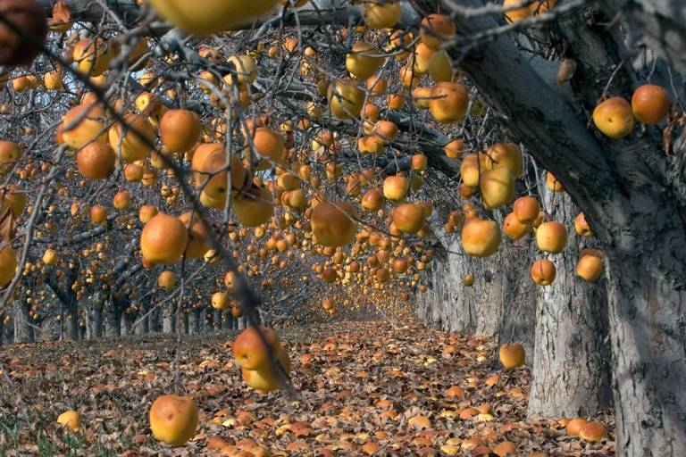 Forgotten Orchard by Randal Day