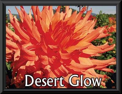 Wyn's Desert Glow