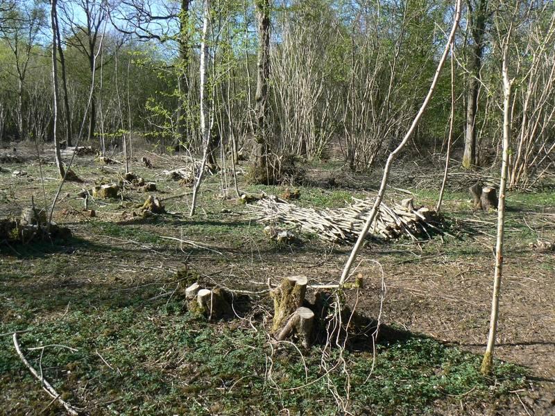 Bradfield Woods NNR - Suffolk