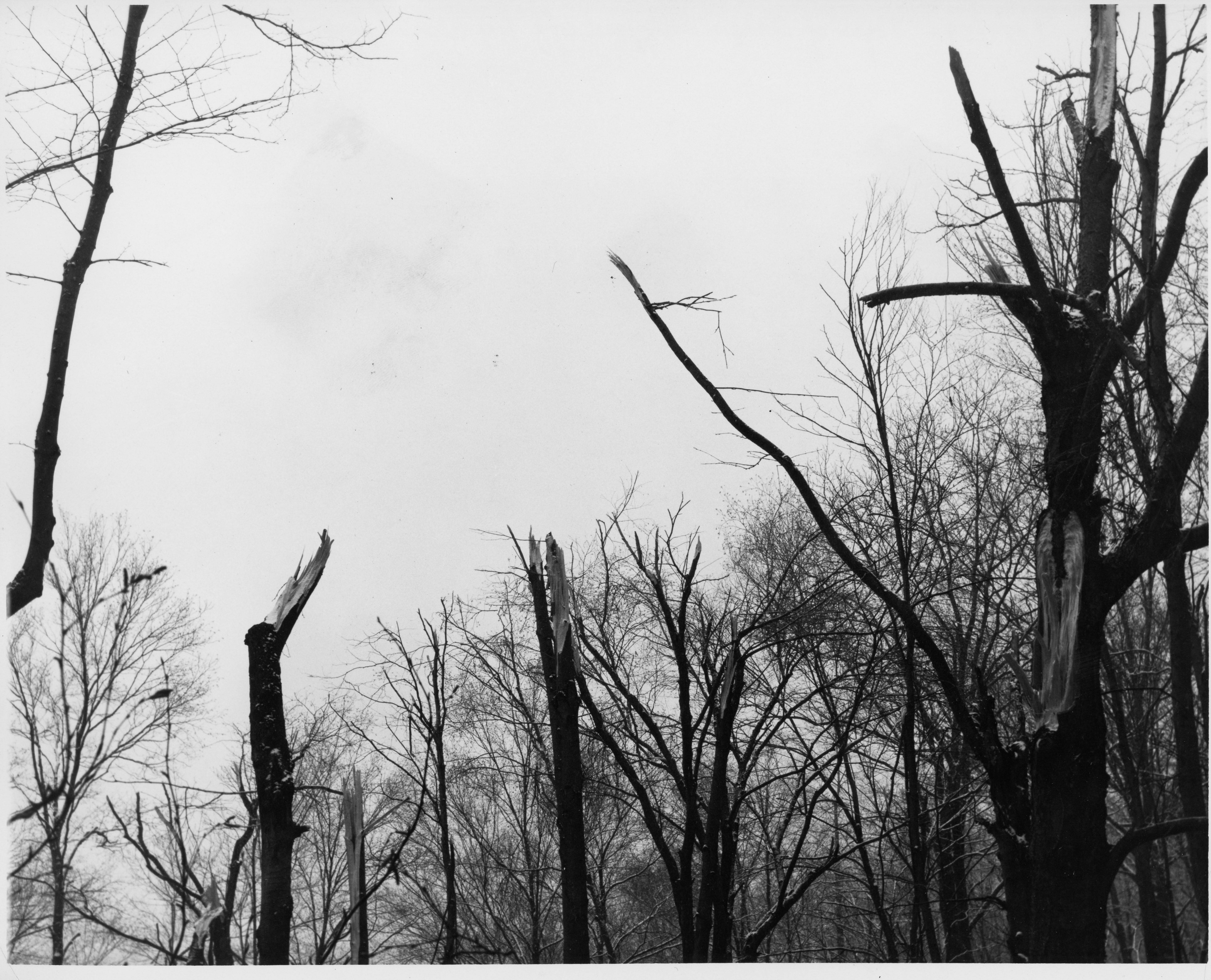 Impact with trees. Photo courtesy of the Williamsport Sun Gazette archive.