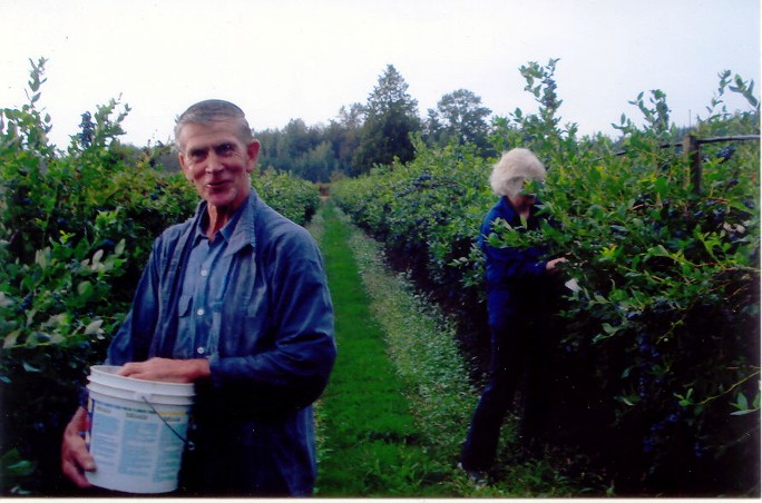 More Blueberry Picking