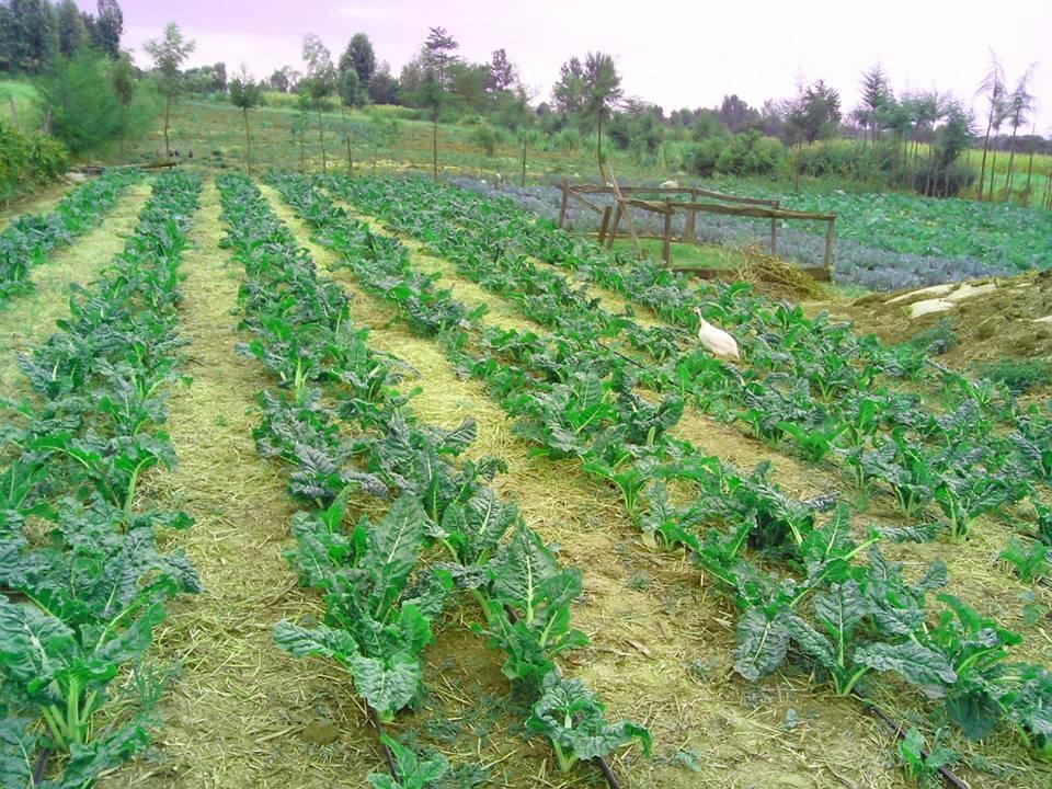 Orphanage garden plot in Kenya