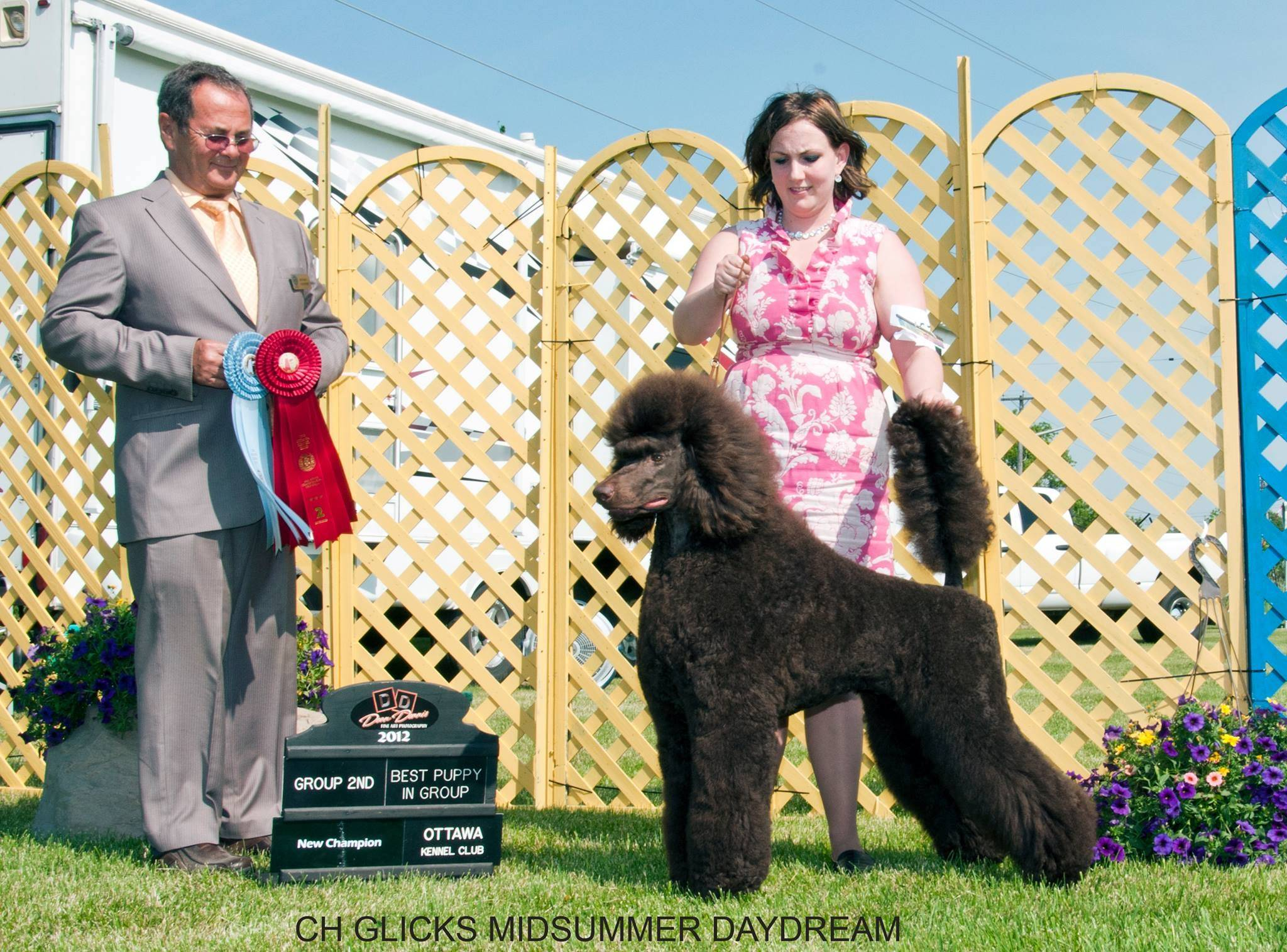 The sire of the litter: CH Glick's Midsummer Day Dream HIT CHIC, call name Guinness