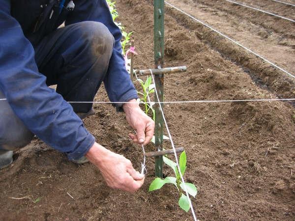 More Posts & Seedlings