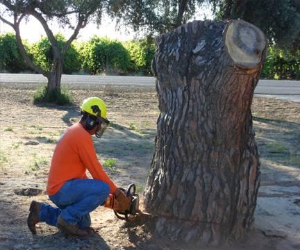 Stump removal!