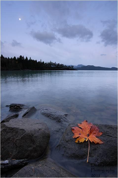 Leaf at Dawn