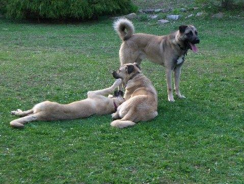 Fahrunisa, Tayyar and Atakan