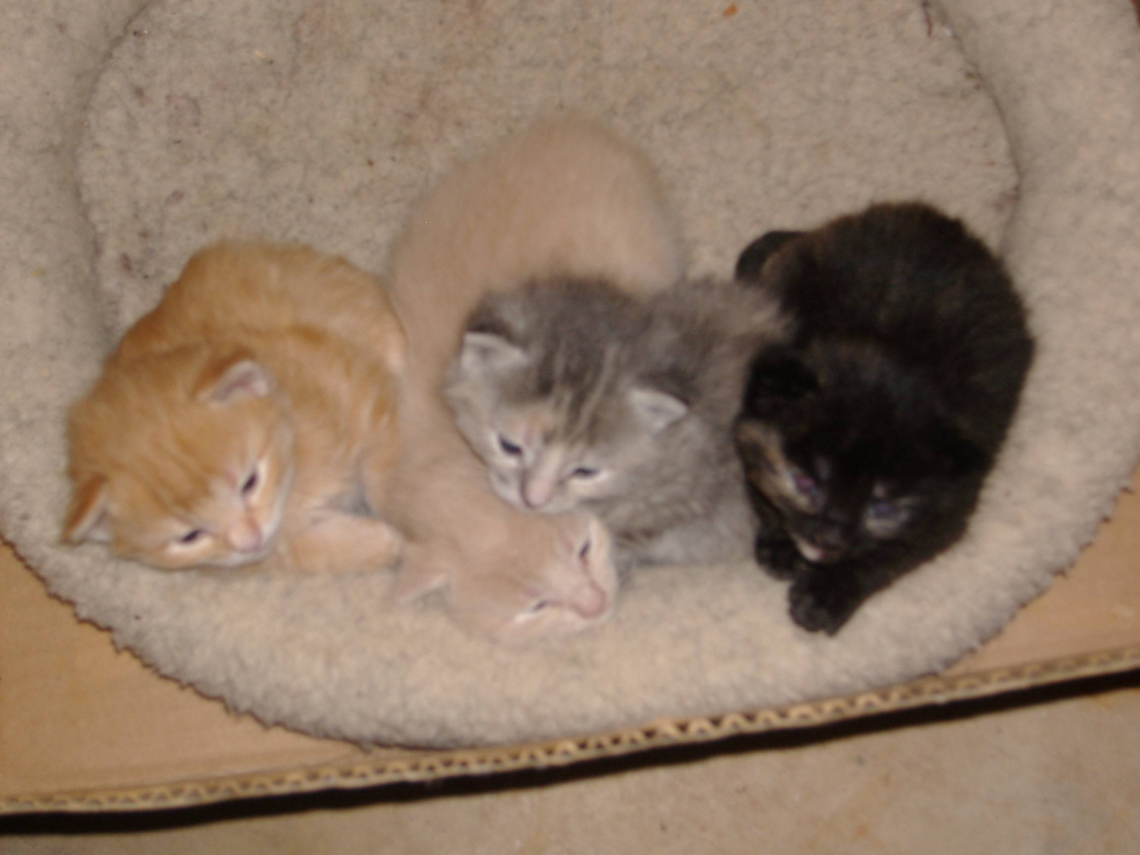 New kittens this fall