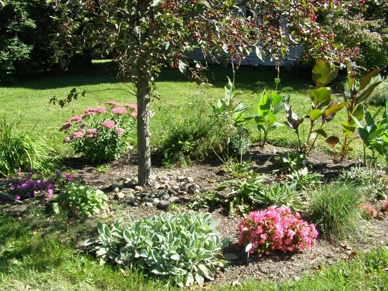 Perennial garden with tree