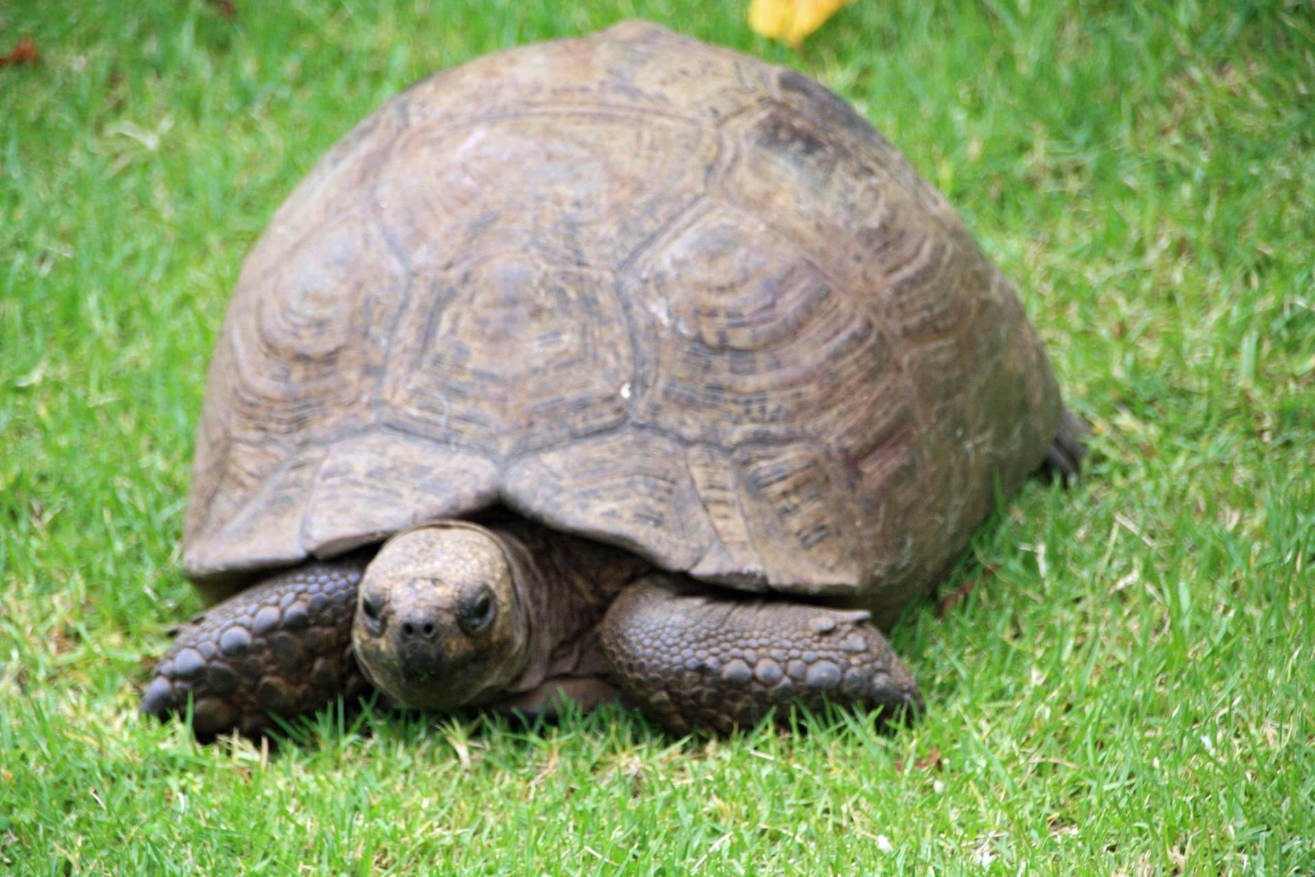 Tortoise at Kirstenbosch Botanical Gardens, Cape Town