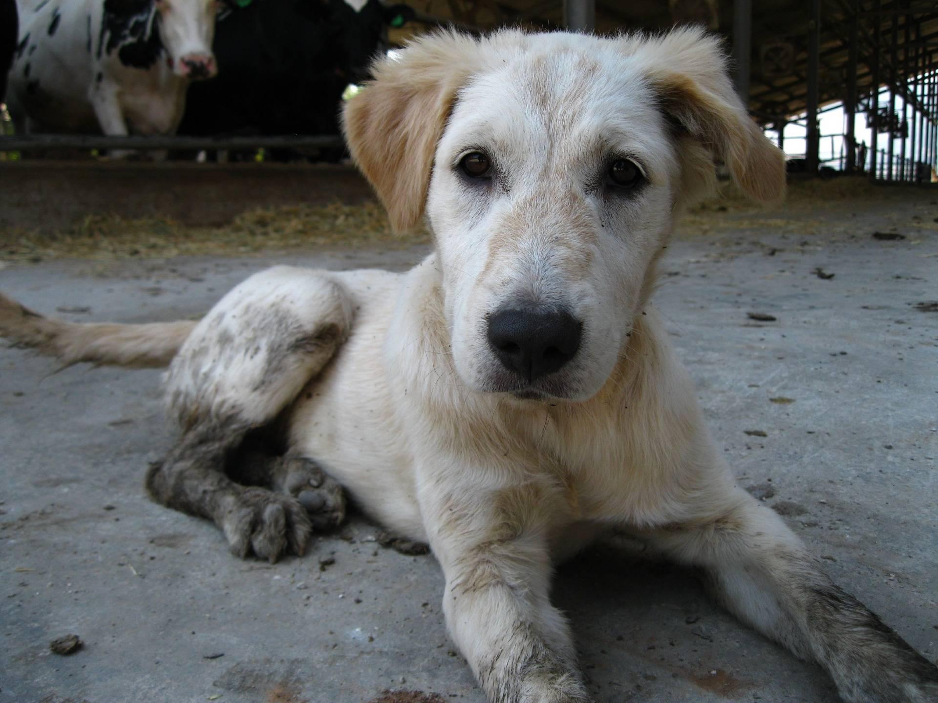Dirty Puppy