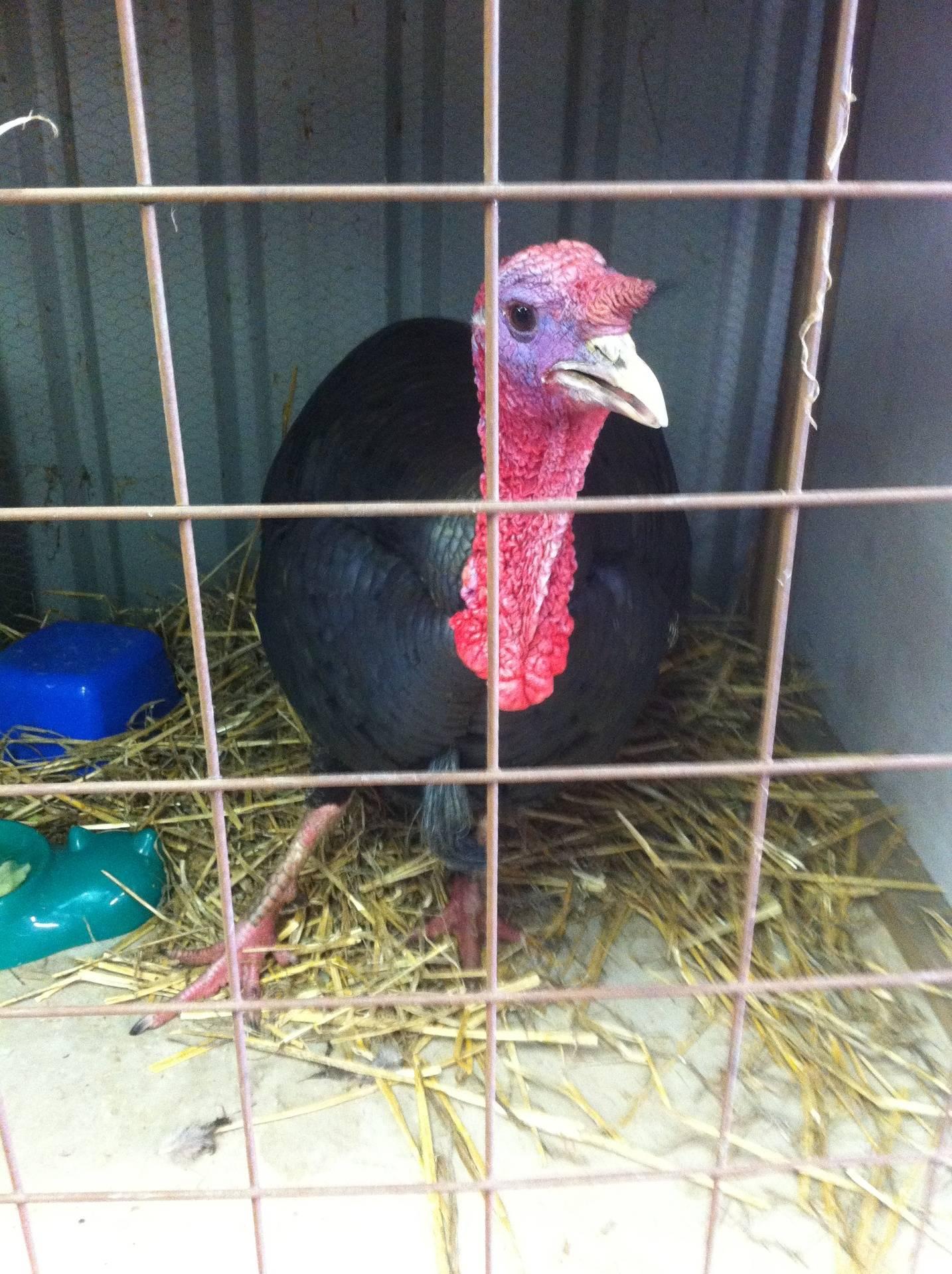 Poultry exhibits