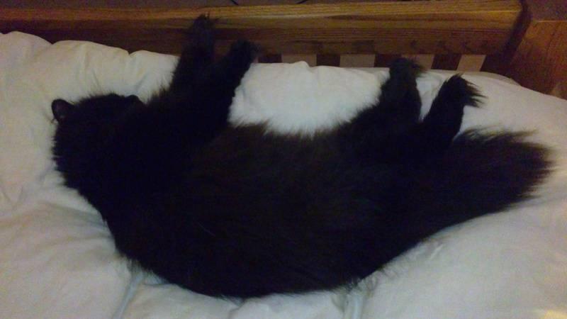 Cedric chilling