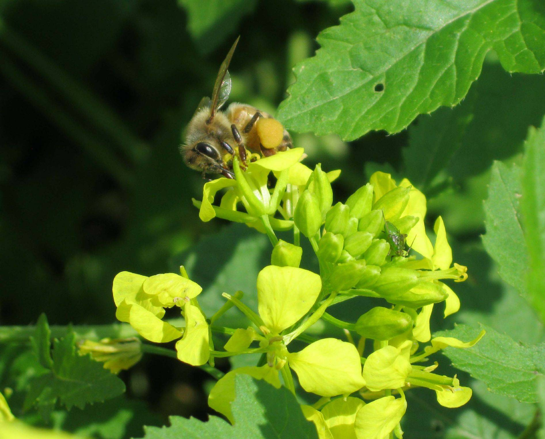 Yellow Flower Bee