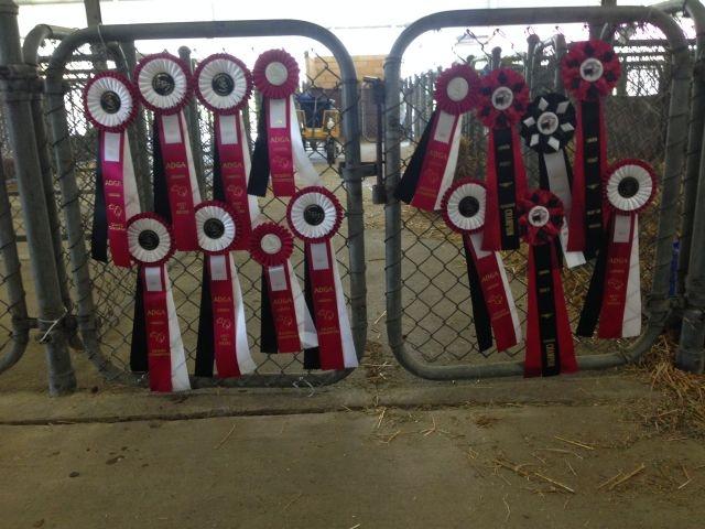 Ribbons at AGPA Show