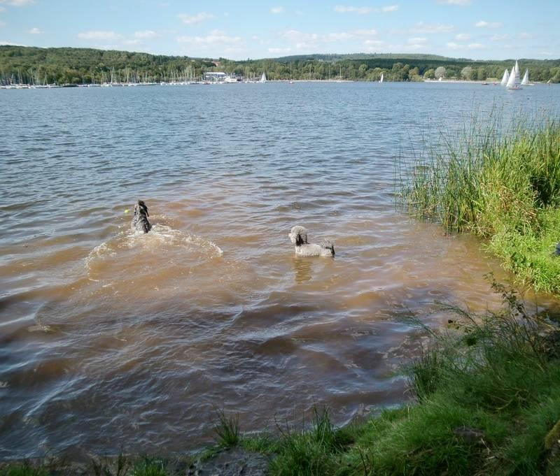 Justin und Strormy schwimmem im Bostalsee
