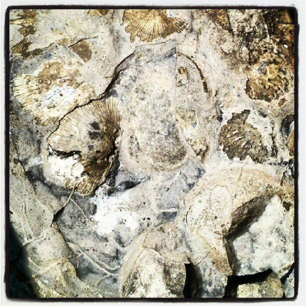 Fossils! - Once Edible