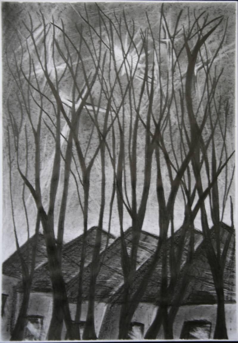 Trees Eleanor MacFarlane