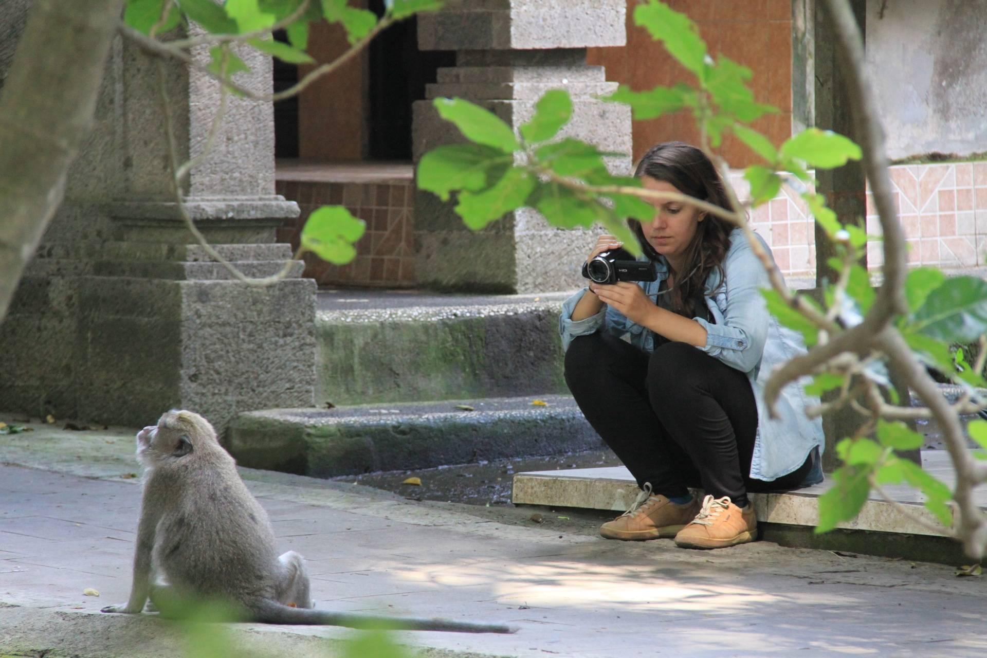 Elenora Neugebauer video-recording an adult male long-tailed macaque (Ubud, Bali, June 2016)
