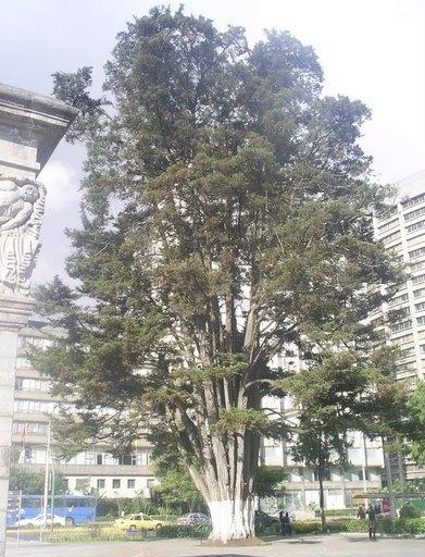 Parque La Alameda